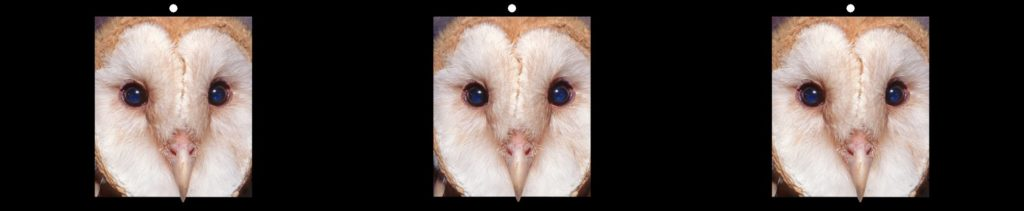 Curious Barn Owl by Robert Bloomberg, Forest Knolls, CA USA