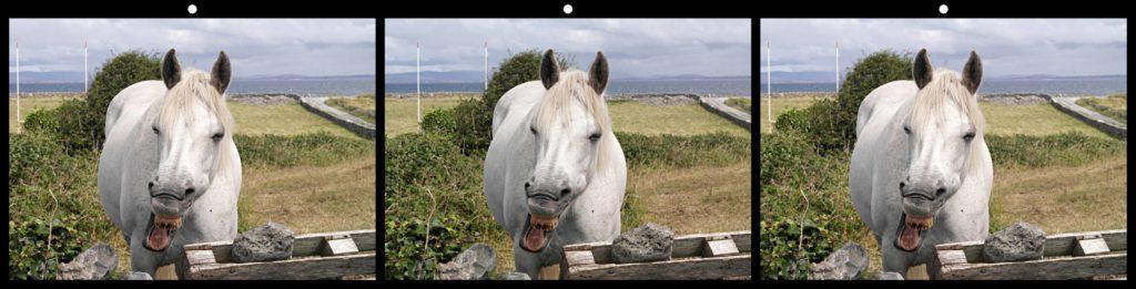 Horse Laugh by Dennis Green, Ferndale, MI USA
