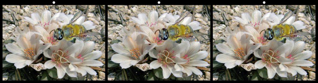 Bee Lunch by Jack Muzatko, Pinole, CA USA