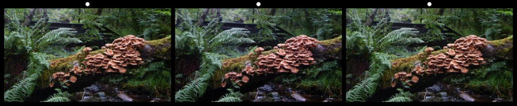 Mushroom Bridge by Bob Price, Enmore, NSW Australia
