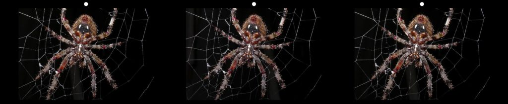 On the Web by Andrea Shetley, Fayetteville, TN USA