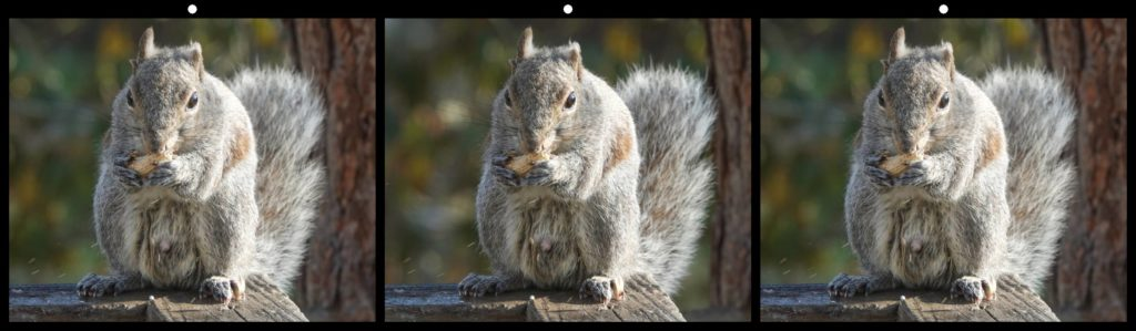 Stealing Peanuts by George Themelis, Brecksville, OH USA